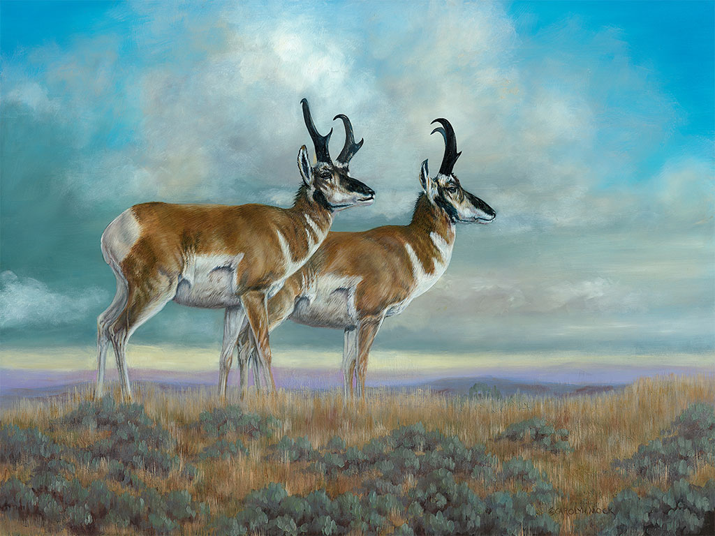 Two pronghorns stand in a field.