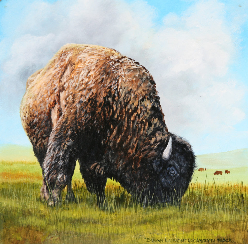 A bison grazing in a field