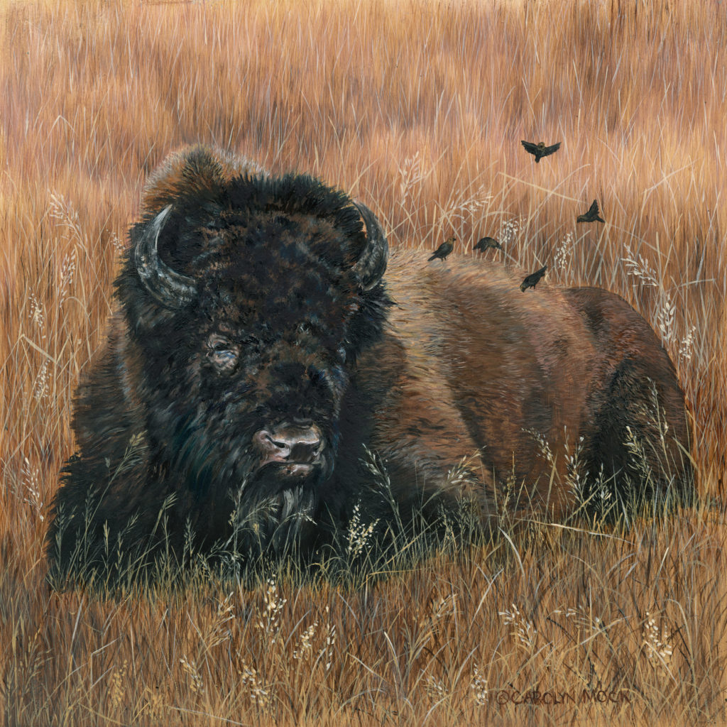 Birds fly around a bison laying in a field