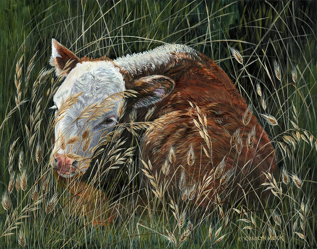 A calf rests in a the tall grass