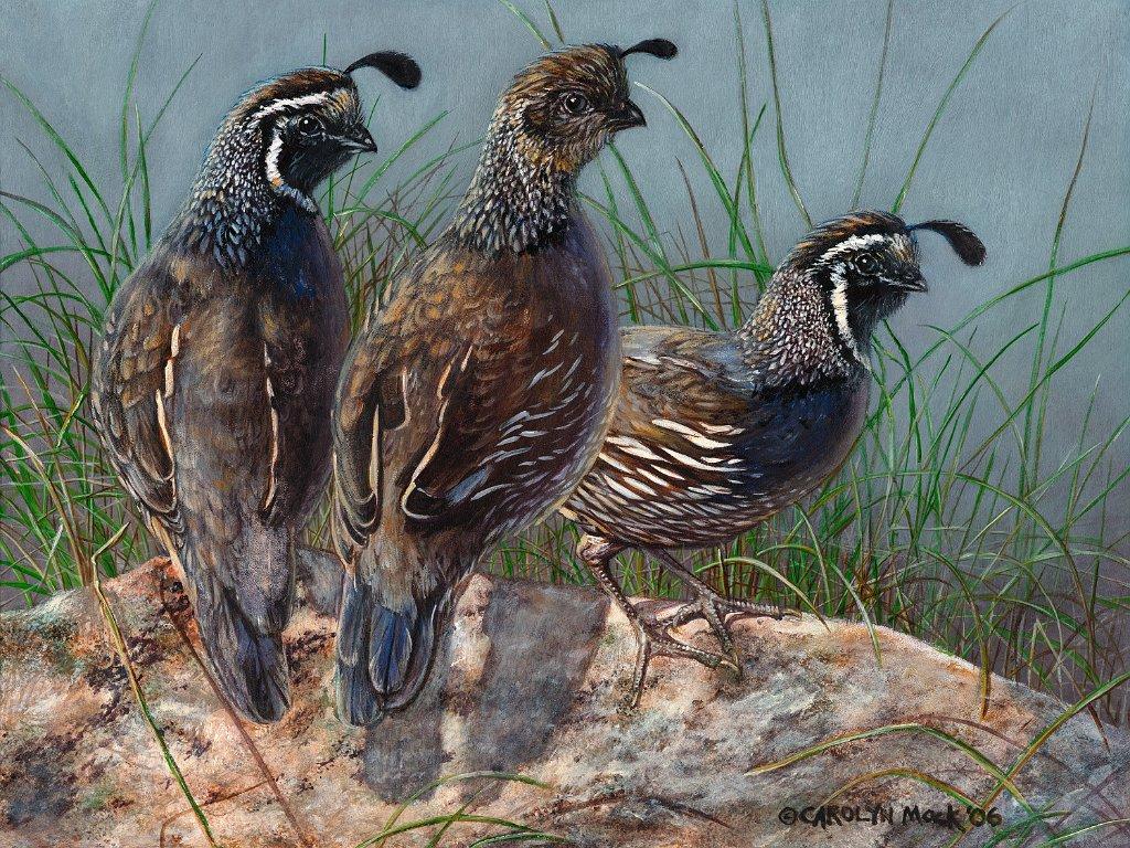 Three quail standing next to a river
