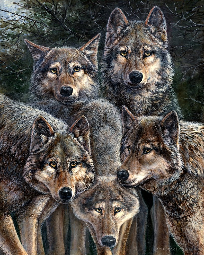 A pack of wolves gather in the woods
