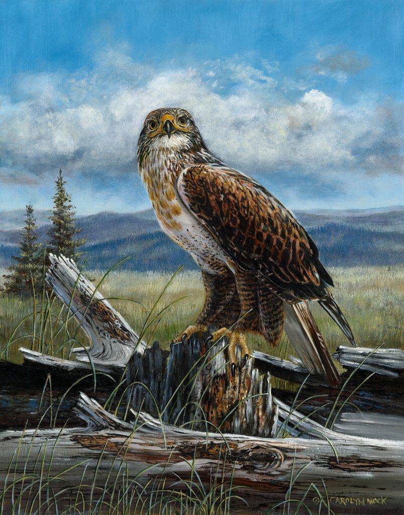 A hawk is perched on a log in an open field