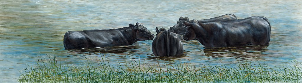 A herd of cattle gather in water