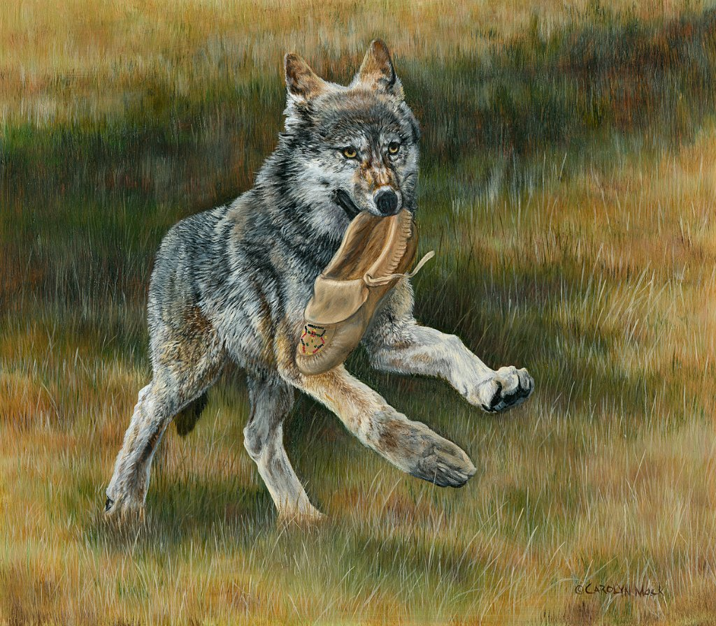 A wolf pup runs off with a moccasin