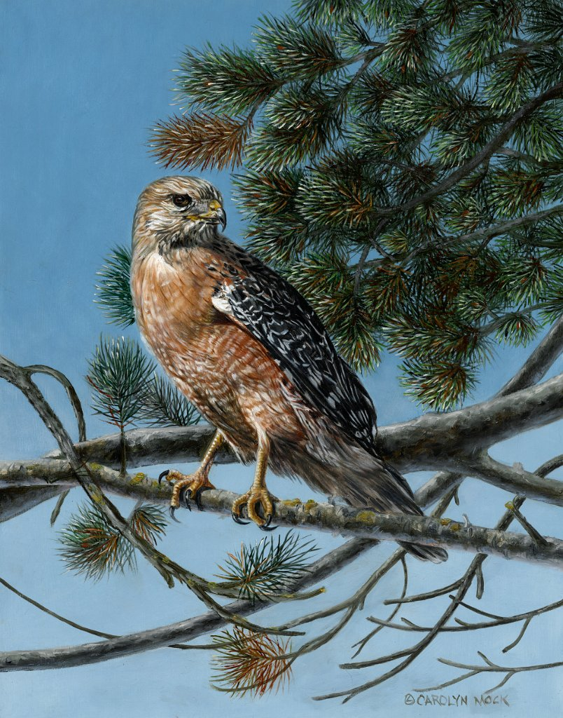 A hawk is perched on a tree branch