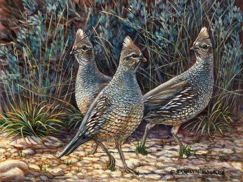 Three quails stand in a field next to tall grass