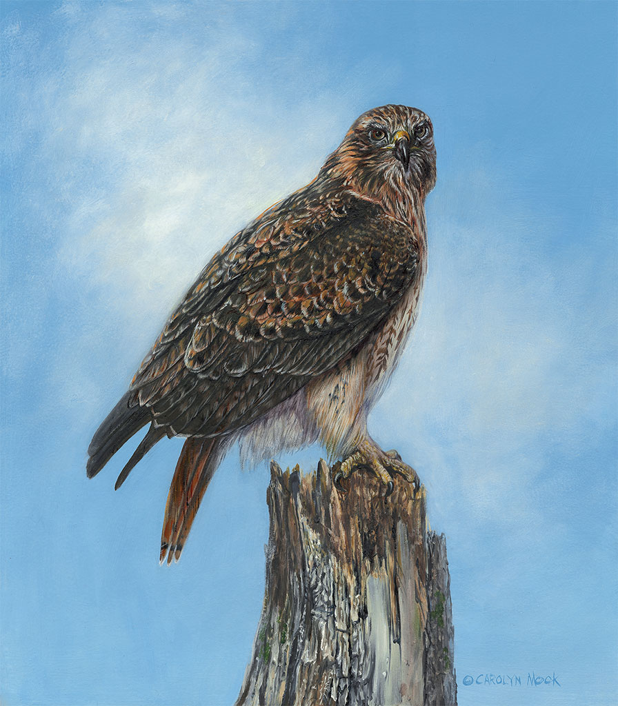 A hawk is perched on a tree in a blue sky