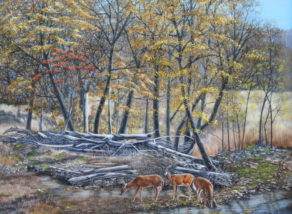 Deer graze in a wooded area