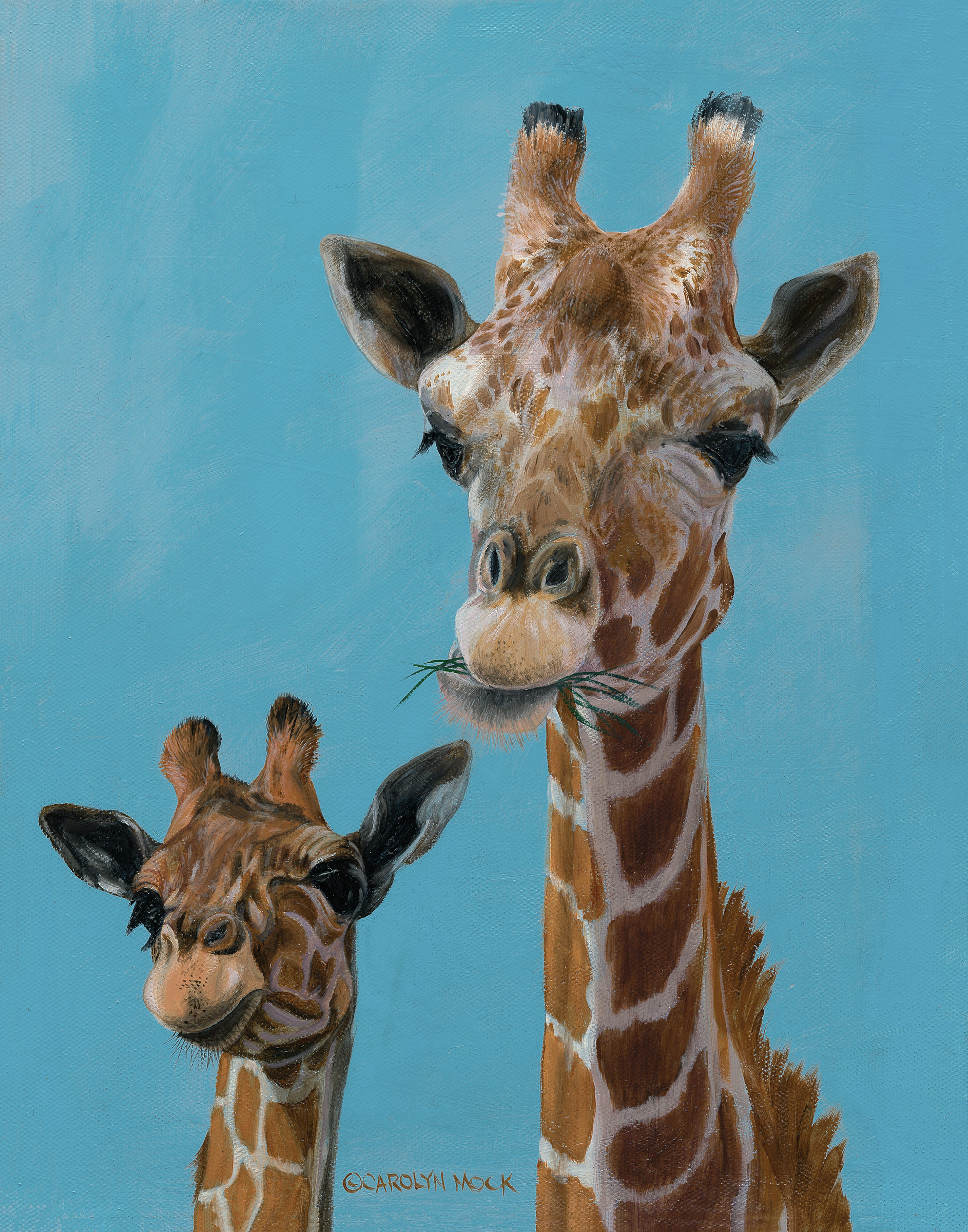 Two giraffes enjoy some greens