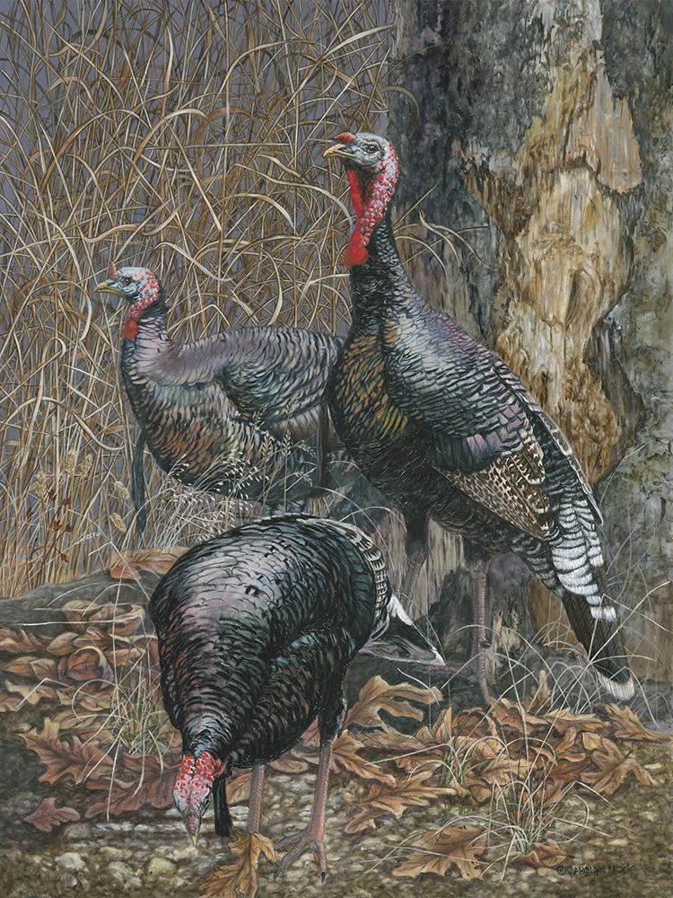 Three turkeys by a tree